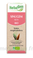 Herbalgem Sinugem Solution Buvable Bio Fl Cpte-gttes/30ml à Mérignac